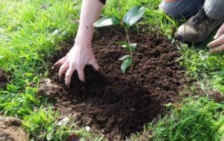 atelier-jardinage-en-famille-trevarez-400x300.jpg